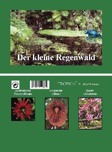 Mini-Gewächshaus - Regenwald - mit Samen vom Feuerradbaum, Gespensterpflanze und Florettseidenbaum