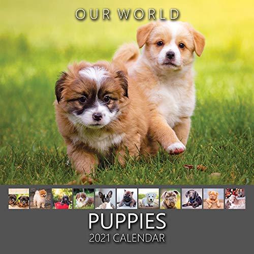 Our World: Puppies 2021 Wandkalender Welpen, niedlicher Hundekalender