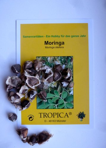 Tropica - Moringa/Wunderbaum - BIG PACK (Moringa oleifera) - 30 Samen