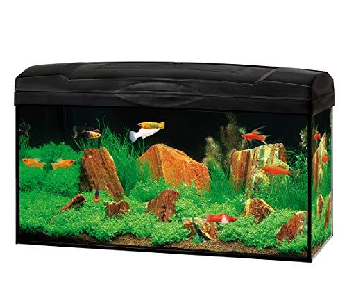 DehnerGute Wahl Aquarium Starterset Scout mit LED-Beleuchtung, ca. 60 x 30 x 30 cm, 54 l, Glas/Kunststoff, transparent/schwarz