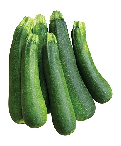 Burpee Best Zucchini Summer Squash Seeds 20 seeds