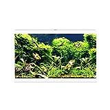 Ciano Aqua 60 LED Tropical Glass Aquarium – Filtro de luces calentador 58 LWHITE
