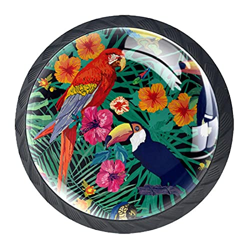 Parrot On Tree Branch, perilla de gabinete de cajón premium Hardware de 4 unidades para oficina, hogar, cocina, cuarto de baño armario aparador