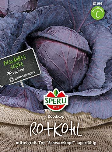 81199 Sperli Premium Rotkohl Samen Roodkop | Fein im Geschmack | Lagerfähig | Mittelgroß | Rotkohl Saatgut | Kohl Samen