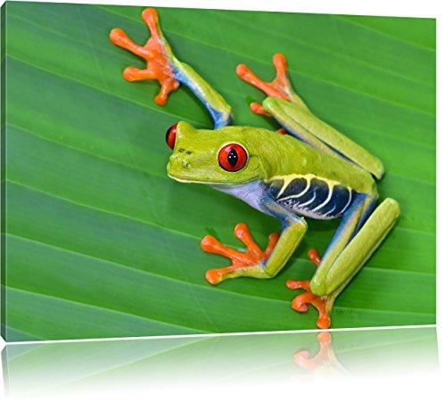 Pixxprint Kleiner grüner Frosch auf Blatt / 100x70cm Leinwandbild bespannt auf Holzrahmen/Wandbild Kunstdruck Dekoration