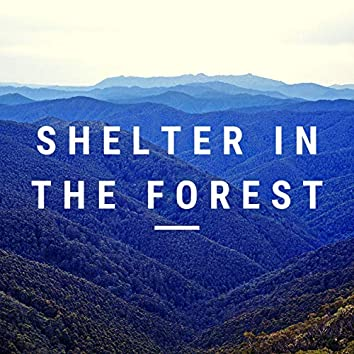 Shelter in the Forest
