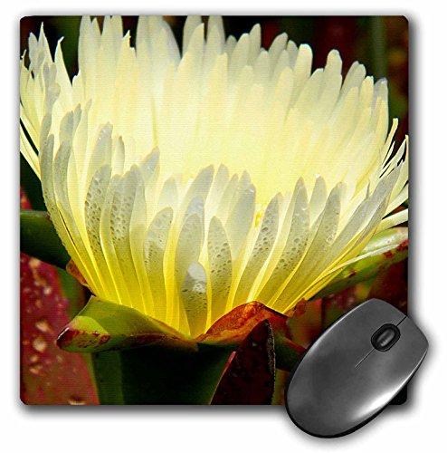 Paul Honatke Fotografie Ijs Plant - Bloem buiten zicht - MousePad (mp_21891_1)