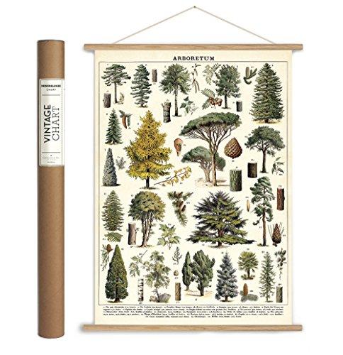 Cavallini Papers & Co. Cavallini Vintage Arboretum Hanging Poster Kit, Multi