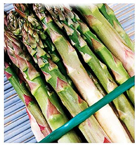 Semi Asparago Argenteuil - Asparagus Officinalis - Asparagi - 150 Sementi Circa Idea Regalo Natale Compleanno Festa