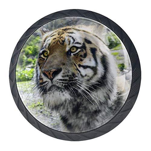 TIZORAX Ferocious Tiger - Juego de 4 pomos redondos para arm