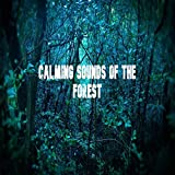 Calming Sounds Of The Forest - Nature Sounds Recording-meditation, Relaxation And Development Of A Calming Environment - Perfect White Sound Of Nature