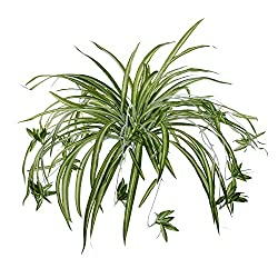 Want To Know About Plants That Grow in Water? - Apartment Roots