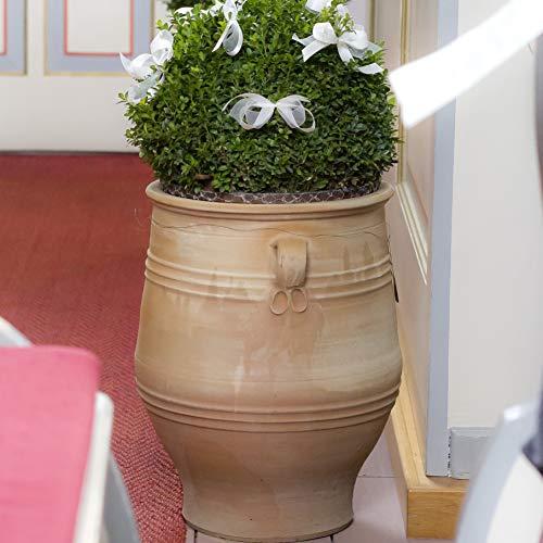 Kreta-Keramik | handgefertigte Terracotta Amphore mit Henkel | 50 cm | mediterraner frostfester Pflanzkübel | Garten Terrasse Dekoration Thymus