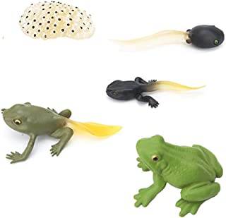 Fantarea 5 PCS Frog Animal Life Cycle Model Figure Classroom Accessories Party Supplies Cake Toppers Desktop Decoration Educational Development Toys for 5 6 7 8 Year Old Boys Girls Kid Toddlers