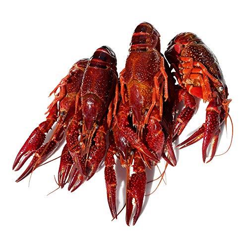 ザリガニ 食用 小龍蝦 約1㎏ ボイルザリガニ 28~30尾 麻辣ザリガニ マーラーシャオロンシア