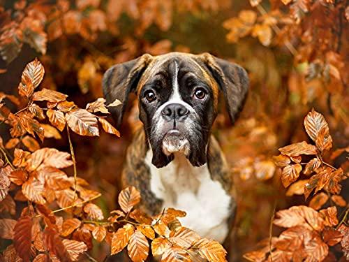 5D DIY perro bordado de diamantes animal punto de cruz decoración de pared de otoño decoración de mascotas kit de bordado pintura de diamantes A8 45x60cm
