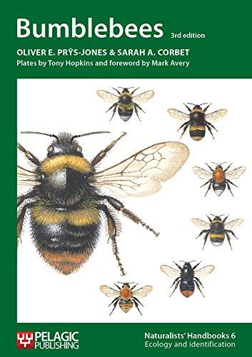 Bumblebees: VOL. 6