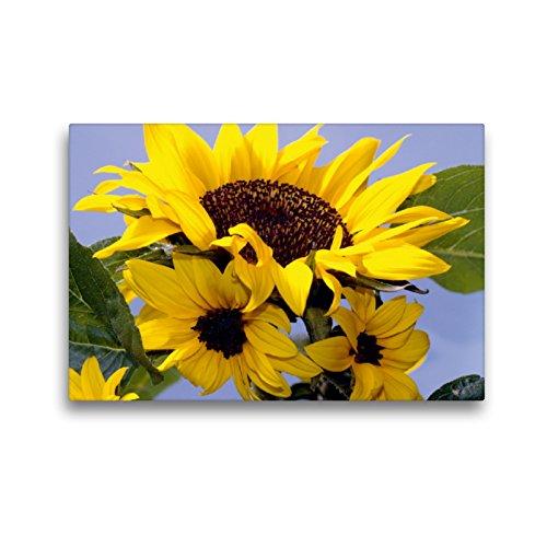 CALVENDO Premium Textil-Leinwand 45 x 30 cm Quer-Format Sonnenblumenfamilie, Leinwanddruck von Lothar Reupert
