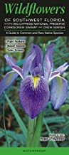 Wildflowers of Southwest Florida including Big Cypress NP, Corkscrew Swamp & CREW Marsh: A Guide to Common & Rare Native Species (Quick Reference Guides)