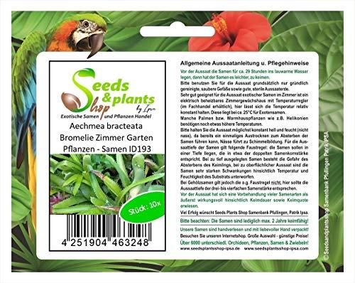 Stk - 10x Aechmea bracteata Bromelie Zimmer Garten Pflanzen - Samen ID193 - Seeds Plants Shop Samenbank Pfullingen Patrik Ipsa