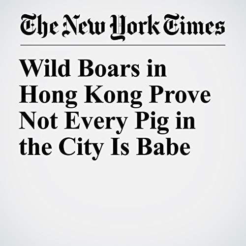 Wild Boars in Hong Kong Prove Not Every Pig in the City Is Babe audiobook cover art