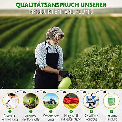 grenzenlos® pflanzlicher Brennnessel Kapseln Komplex - Markenprodukt aus Deutschland ohne chemische starke Entwässerungstabletten stark mit 90 Kapseln - 100% vegan - mit Magnesium angereichert