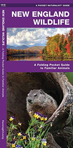 New England Wildlife: A Folding Pocket Guide to Familiar Animals (Wildlife and Nature Identification)