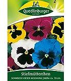 Riesen-Stiefmütterchen'Schweizer Riesen', 1 Tüte Samen