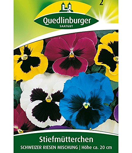 Quedlinburger Riesen-Stiefmütterchen'Schweizer Riesen', 1 Tüte Samen