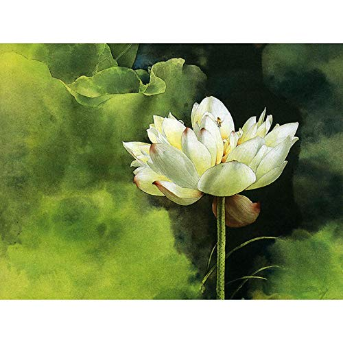 NA/ Paint by Numbers DIY Oil Painting Adults, DIY Painting Paint by Numbers Kits on Canvas - Raw Fragrant Lotus-cod.(16X20 Inch, Frameless)