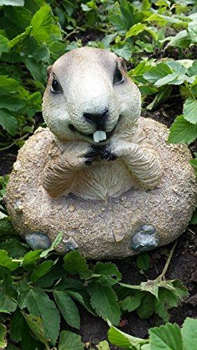 Erdmännchen Figur (E5) Gartenfigur Tierfigur NEU 6 Modelle zur Wahl Wetterfest Gartenzwerg Deko Polystone