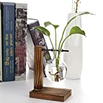 Water Planting Glass Vase,Clear Glass Vase Hanging Plant Terrarium with Retro Solid Wooden Stand for Hydroponics Plants… 11 ♚MATERIAL-Wooden+Glass.Great for floral arrangement, home decoration as well as various gift ideas ♚ DESIGN - Vintage design,DIY Planter with mini bulb shape vase in wooden stand. Smooth surface, good permeability, beautiful style ♚DECORATION- Fill with small plants,goldfish,or other decorative objects like beach sand and shells you collected and use as an eye-catching decorative accent for any space. Ideal for home, office, garden, wedding or holidays as a decoration.