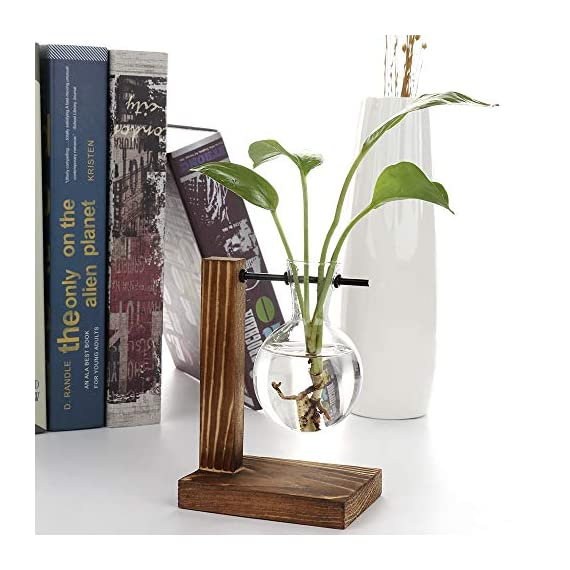 Water Planting Glass Vase,Clear Glass Vase Hanging Plant Terrarium with Retro Solid Wooden Stand for Hydroponics Plants… 4 ♚MATERIAL-Wooden+Glass.Great for floral arrangement, home decoration as well as various gift ideas ♚ DESIGN - Vintage design,DIY Planter with mini bulb shape vase in wooden stand. Smooth surface, good permeability, beautiful style ♚DECORATION- Fill with small plants,goldfish,or other decorative objects like beach sand and shells you collected and use as an eye-catching decorative accent for any space. Ideal for home, office, garden, wedding or holidays as a decoration.