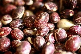 Good Mother Stallard Pole Bean Seeds - 100 Seeds - Heirloom