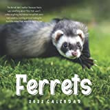 Ferrets 2022 Calendar: Great 12-month Large Grid Calendar 8.5 x 8.5 for scheduling, planning, and note!!!