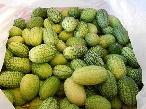 Mexikanische Mini-Gurke (Blickfang im Garten) 10 Samen
