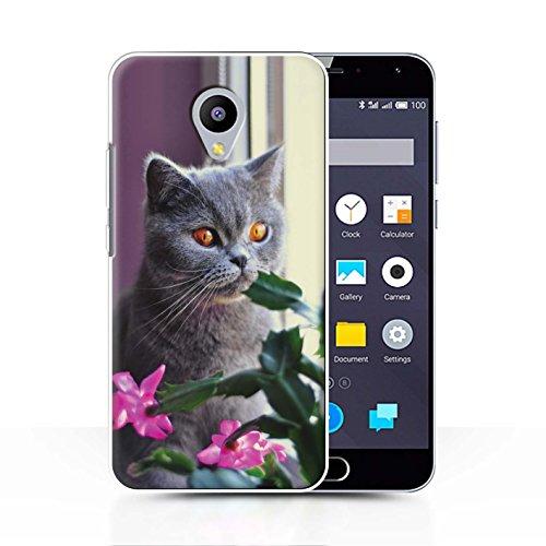 Stuff4® Hülle/Case für Meizu M2 Note/Britisches Blau/Kurzes Haar Muster Katze/Katzenrassen Kollektion