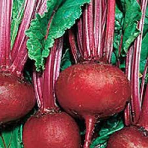 SEMENCES DE BETTERAVES, DETROIT rouge foncé, Heirloom, BIO, NON OGM, 500 graines, BETTERAVES DOUX