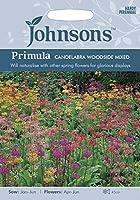 英国ミスターフォザーギルズシード&ジョンソンシード Plantmans's Garden Primula hybrida Candelabra プリムラ・ハイブリッダ・カンデラブラ