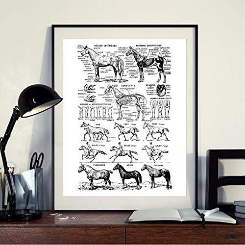 Terilizi paard print zwart en wit medicine poster anatomie illustratie muurkunst afbeelding canvas schilderij wanddecoratie 30 x 40 cm geen lijst