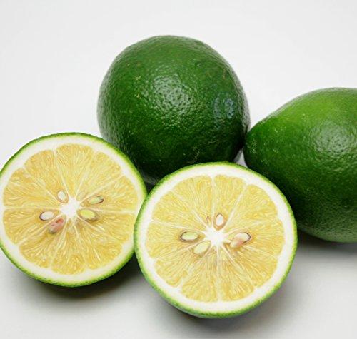 国産 レモン 10kg 佐賀県産 防腐剤不使用 特別栽培農産物 ご家庭用 訳あり