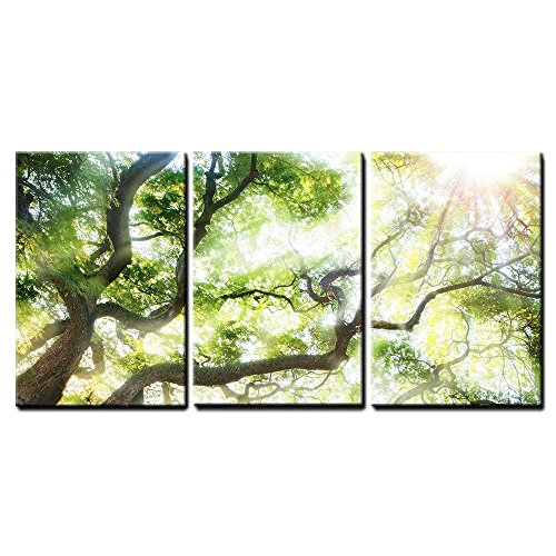 "wall26 - Big Tree with Sun Light - Canvas Art Wall Decor - 16""x24""x3 Panels"