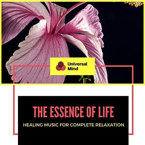Liquid Ambiance, Mystical Guide, Sanct Devotional Club, Ambient 11, ArAv NATHA, AlFa RaYn, Serenity Calls, Yogsutra Relaxation Co, Pause & Play, Zen Town & Trinity Meditationn Club