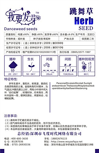 Mix Mini $ 5 25pcs / sac Desmodium gyrans Seeds POT Desmodium Motorium PLANT GARDEN BONSAI Danse Graminées Herbacées DIY HOME PLANTES
