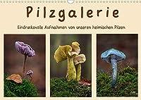 Pilzgalerie - Eindrucksvolle Aufnahmen von unseren heimischen Pilzen (Wandkalender 2022 DIN A3 quer): Einzigartige Pilzaufnahmen wie man sie nur selten sieht (Monatskalender, 14 Seiten )