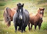 Edition Seidel Pferde Premium Kalender 2020 DIN A3 Wandkalender Pferdekalender Tiere