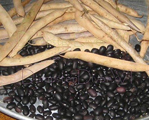 Tortue Noire/Haricots adzuki 35+ Graines Délicieux espagnole préférée non-OGM organique