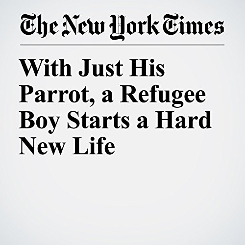 With Just His Parrot, a Refugee Boy Starts a Hard New Life copertina