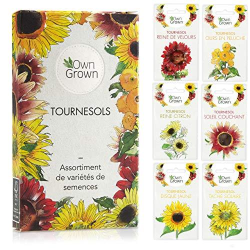 Kit de graines de tournesol: Graines de tournesol de qualité supérieure avec 6 variétés de belles graines de fleur d'extérieur - Set de jardinage graines de fleurs Tournesol par OwnGrown