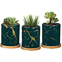 Set of 3 T4U Ceramic Plant Pots for Succulents